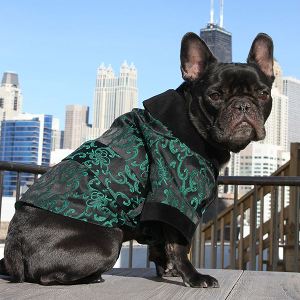 dog_brocade_1__82588.1356645299.1000.1000